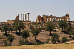 Ruines romaines de Volubillis Photo libre de droits