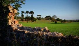 Ruinierte Backsteinmauer stockfotos