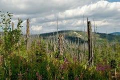 Ruinierter Wald Stockfotografie