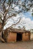 Ruiniertes Haus und Baum des luftgetrockneten Ziegelsteines Lizenzfreie Stockfotografie