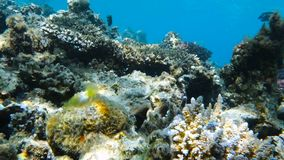 Ruiniertes Korallenriff stock video footage