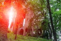 Ruiniertes mittelalterliches Schloss durch Baumniederlassungen im Sonnenlicht Stockfotos