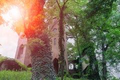 Ruiniertes mittelalterliches Schloss durch Baumniederlassungen im Sonnenlicht Lizenzfreie Stockbilder