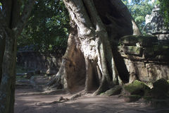 Ruins of ancient Angkor temple Ta Phrom Royalty Free Stock Photography