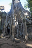 Ruins of ancient Angkor temple Ta Phrom Stock Photos