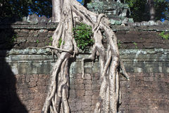 Ruins of ancient Angkor temple Ta Phrom Royalty Free Stock Photo