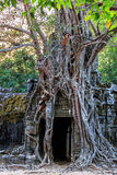 Ruins of ancient buddhist khmer temple. Ancient stone door and tree roots in ruins of buddhist khmer temple near Siem Reap, Cambodia Royalty Free Stock Images