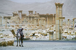 Ruins of ancient city Palmyra Royalty Free Stock Images