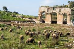 Ruins of ancient city of Patara. Turkey. Stock Photos