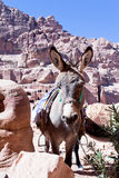Ruins of ancient city Petra and donkey Royalty Free Stock Photos
