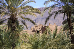 The ruins of an ancient fortress surrounded by palm trees Stock Images