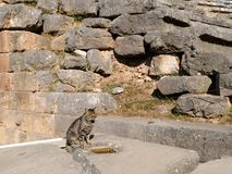 Ancient Greek Stone Wall and a Grey Tabby Cat, Sanctuary of Apollo, Mount Parnassus, Greece. The ruins of an Ancient Greek stone block wall, polygonal masonry Stock Photos