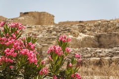 Ruins of the ancient Greek town of Idalion (or Idalium) Royalty Free Stock Photo