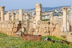 Ruins of the ancient Jerash, the Greco-Roman city of Gerasa in modern Jordan. Amman, Jordan - March 23,2015: Ruins of the ancient Jerash, the Greco-Roman city of Stock Photo