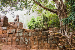 Ruins of Ancient khmer civilization, Angkor Wat, Cambodia Stock Photos
