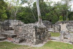 The ruins of the ancient Mayan city of Kohunlich, Quintana Roo, Mexico.  Stock Photos
