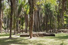 The ruins of the ancient Mayan city of Kohunlich, Quintana Roo, Mexico.  Royalty Free Stock Photography