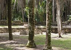 The ruins of the ancient Mayan city of Kohunlich, Quintana Roo, Mexico.  Royalty Free Stock Photo