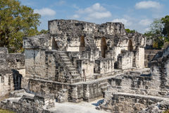 Ruins of the ancient Mayan city of Tikal Stock Images