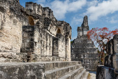 Ruins of the ancient Mayan city of Tikal Stock Image