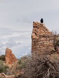 Ruins of ancient pueblos with raven perched on top Stock Photography