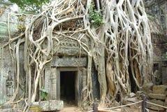 Ruins of ancient temple. Angkor wat, Cambodia Stock Image