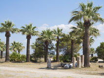Ruins of the ancient temple columns, palm trees and blue sky Stock Photos