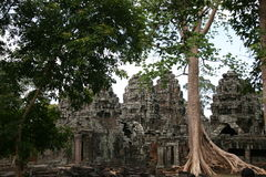Ruins of ancient temple and giant tree roots Royalty Free Stock Photography