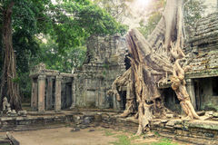 Ruins of ancient temple lost in jungle Royalty Free Stock Photography