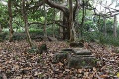 Ruins & Ancient Royalty Free Stock Image