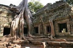 Ruins of Angkor, Siem Reap Royalty Free Stock Photography