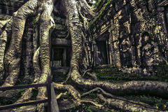 Ruins. Of Angkor Wat, Cambodia Stock Images