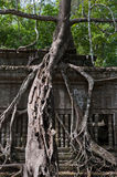 Ruins of Beng Mealea, Angkor, Cambodia Stock Photography