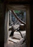 Ruins of Beng Mealea, Angkor, Cambodia Royalty Free Stock Photo