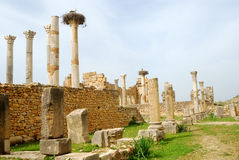 Ruins of the Capitol, Volubilis, Morocco. Stork nest is above the Roman ruins of ancient Volubilis Stock Images