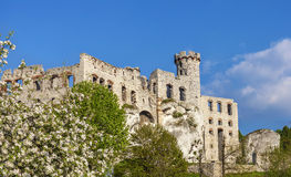 Ruins of a castle and tree in blossom. Stock Photo