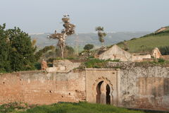 Ruins of Cellah in Rabat with Royalty Free Stock Photography