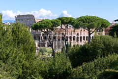 Ruins of the colosseum in Rome Royalty Free Stock Images