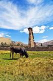 Ruins and Cow Stock Images