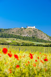 Ruins of Devicky Castle with vineyards. Czech Republic Stock Images