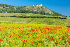 Ruins of Devicky Castle. With vineyards, Czech Republic Royalty Free Stock Images