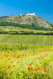 Ruins of Devicky Castle. With vineyards, Czech Republic Stock Photography