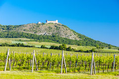 Ruins of Devicky Castle. With vineyards, Czech Republic Royalty Free Stock Photos