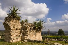Ruins in the field. Weeds and plants growing in the ruins - Israel Royalty Free Stock Photo