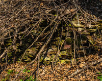 Ruins in the forest, haunted, spooky, dark Royalty Free Stock Photography