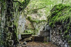 Ruins in the forest Stock Photo