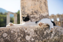 Ruins of greek city Ephesus. In Turkey,a cat lying on a rubble Royalty Free Stock Photos