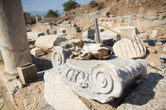 Ruins of greek city Ephesus. In Turkey,a cat lying on a rubble Royalty Free Stock Photography