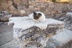Ruins of greek city Ephesus. In Turkey,a cat lying on a rubble Stock Photos