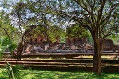 Ruins hidden behind tropical jungle tree Stock Photography